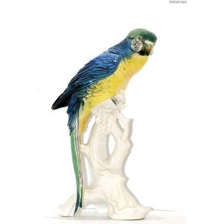 ENS papuga